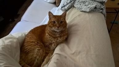 cat-help